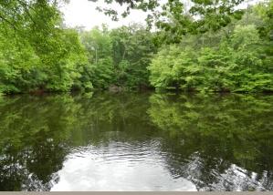 Secret Fish Pond