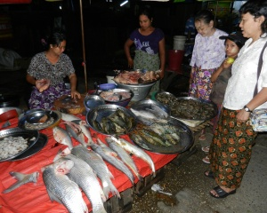 Fish & Chicken Market