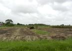 Harvested Sugarcane Field