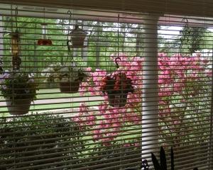 96 dpi 8x10 in bloom3