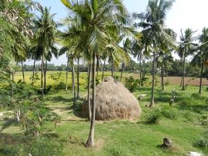 96 dpi 5x6 India landscape 1