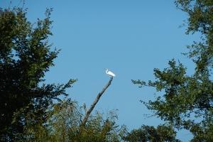 96-dpi-4x6-crane-in-a-tree